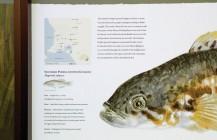 Wildlife park fish interpretation