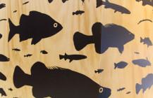 Murray Darling Association: bringing native fish interpretation to Mildura