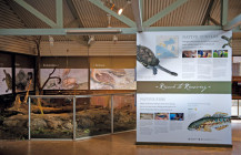 Native turtle rescue: a new interpretation of space in Cleland Wildlife Park