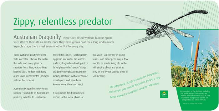 SLB-Dragonfly