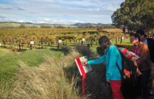 Jacob's Creek: connecting sustainability and stories in the Barossa